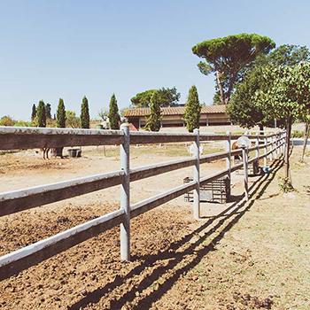 Gli esterni | Azienda Agricola Ceppeto 1°